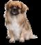 Koiraparkki Lissu, koirapäiväkoti